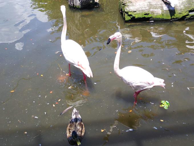 神戸どうぶつ王国の動物ふれあい体験「水鳥おやつタイム」