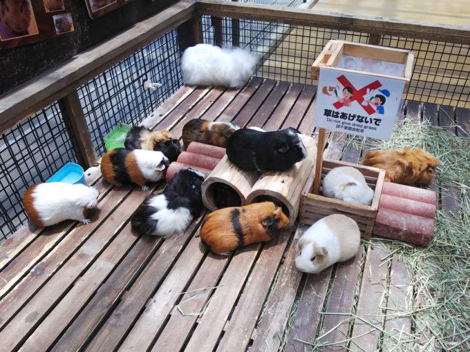 神戸どうぶつ王国の動物ふれあい体験「ピョンタッチ広場」